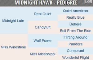 midnight hawk pedigree