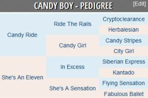 Candy Boy pedigree