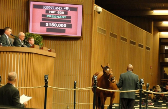 Hip 628 Cove Keeneland sale