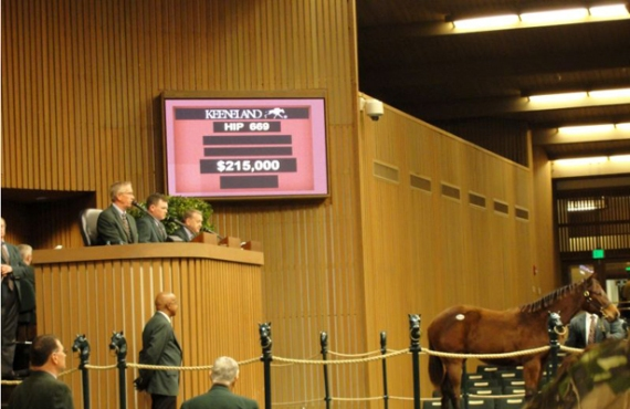 Hip 669 Keeneland 2015 sale