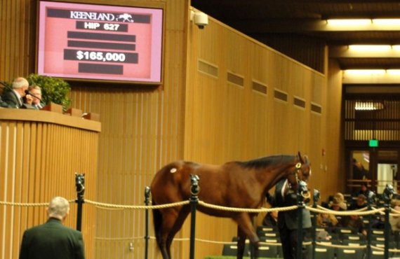 Hip 627 Keeneland sale