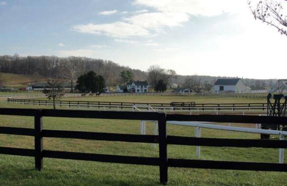 Merryland Farm 2014
